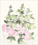 Pink flowers mallow with green leaves. Greeting ca Stock Photo