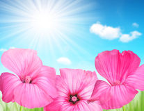 Pink flowers on the meadow. Royalty Free Stock Photos