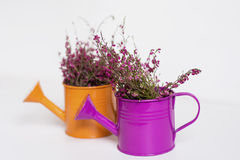 Pink flowers in a  mini watering cans Stock Images