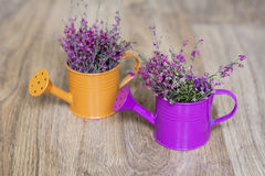 Pink flowers in a  mini watering cans Stock Photo