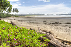Pink Flowers on Misty Playa Guiones Stock Image