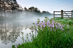 Pink Flowers by a Misty River stock image