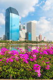 Pink flowers and modern city skyline of business district downto Royalty Free Stock Image