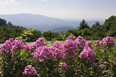Pink Flowers in the Mountains. Pretty pink flowers in the foreground with mountain views in the background Stock Images