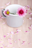 Pink flowers in a mug Royalty Free Stock Photos