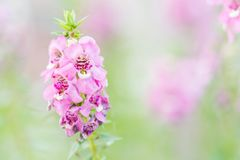 Pink flowers for background. Pink flowers in nature for background stock image