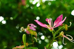 Pink flowers at beautiful of thailand. stock images