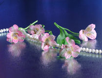 Pink flowers and necklace Royalty Free Stock Photography