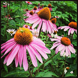 Pink Flowers in New York City Stock Photo