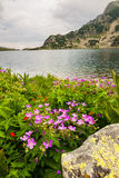 Pink Flowers Next to a Mountain Lake Stock Images
