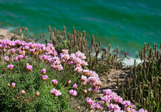 Pink Flowers On Cliff By Emerald Sea Royalty Free Stock Photos