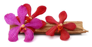 Pink flowers orchid. Beautiful Red Vanda orchids flowers, isolated on white background Stock Photo