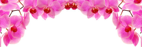 Pink flowers orchid. Royalty Free Stock Images