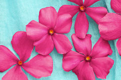 Pink flowers over blue Stock Photo