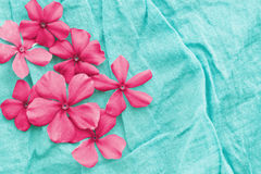 Pink flowers over blue stock image