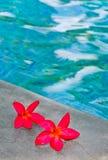 Pink flowers on pool edge Stock Image