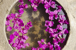Pink Flowers in a pot. With water Stock Photo