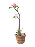 Pink flowers are in the pot. Stock Photo