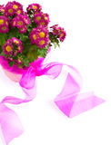 Pink Flowers in the Pot  on Wite Background Stock Images
