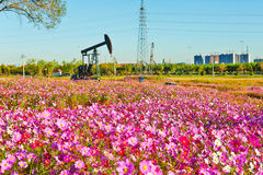 The pink flowers and pumping unit Stock Images