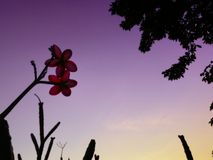 Pink flowers on purple sky Stock Photography