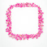 Pink flowers rectangular frame Stock Image