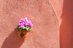 Pink flowers on the red wall of a house Royalty Free Stock Image