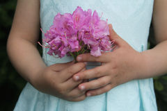 Pink flowers of a rhododendron girl holding in hands Stock Images