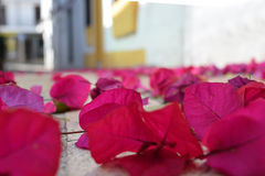 Pink flowers on the road in the old town in Andalusia Stock Image