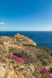 Pink flowers on rocky Corsican coast with lightouse in distance Royalty Free Stock Photography