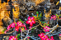 Pink flowers in Saraswati Temple in Ubud, Bali Royalty Free Stock Photography