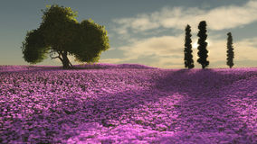 Pink Flowers Sea, 3d CG Stock Photos