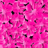Pink flowers in a seamless pattern Stock Images