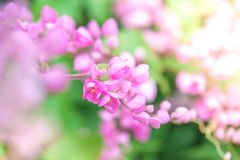 Pink flowers selective focus Stock Image