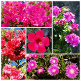 Pink flowers. Set of pink blossoms of various plant Royalty Free Stock Images