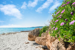 Pink flowers by the shore in Le Bombarde beach Stock Photo