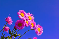 Pink flowers in the sky Royalty Free Stock Photo