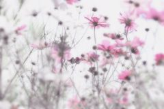 Pink flowers with soft and blurry white background . Dreamy effect. Stock Image