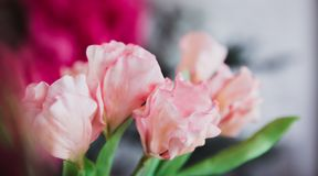 Pink flowers in soft style for background stock images