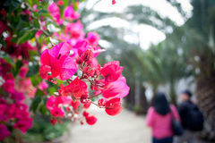 Pink flowers. Pink spring flowers in the park with unfocused people in the background royalty free stock photo