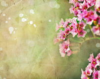 Pink flowers spring romantic background Royalty Free Stock Image