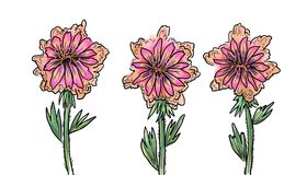 Pink flowers, still life. 3 pieces on white background Stock Photography