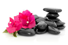 Pink flowers and stones. Pink Bougainvillea flowers and polished stones Stock Images
