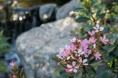 Pink flowers by a stream stock image
