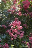Pink flowers with sunset lights stock photos