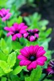 Pink flowers. In tre green garden stock photos