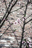 Pink flowers on the tree branch. Stock Photos