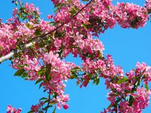 Pink Flowers on Tree Branch during Daytime Stock Images