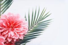 Pink flowers and tropical leaves on on white desktop background, top view, creative layout with copy space, border stock photo