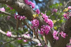 Pink flowers on the trunk of a tree.  Royalty Free Stock Image